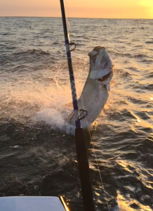 tarpon on the hook